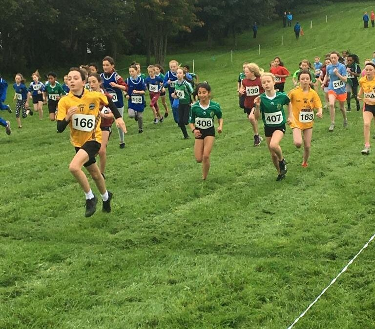 AAI Cross Country
