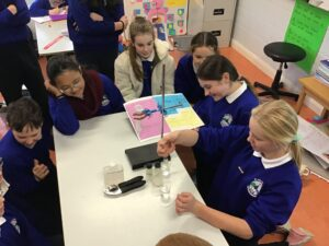 Science Week in Room 15